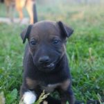 House Training 101! Solving your puppy house training problem!