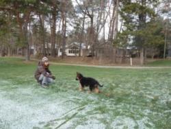 Ginger German Shepard Dog from East Lansing Michigan